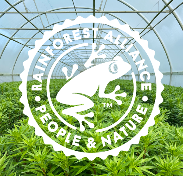 Sun Valley Rainforest Alliance Certified