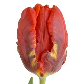 Tulip Fancy Rococco Flower