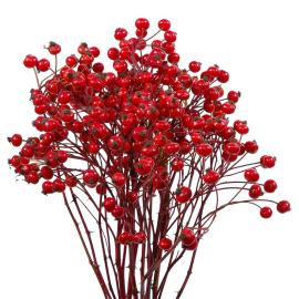 Speciality Branches Rosehips Autumn Pride