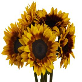 Sunflower Mahogany Simple Flower Bunch