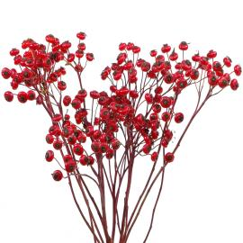 Specialty Branches Giant Fantasy Rosehips