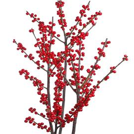 Speciality Branches Red Veriticillata  Ilex
