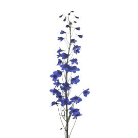 Delphinium  Sea Waltz Flower