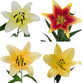 Wholesale sonata lilies mixed flower box