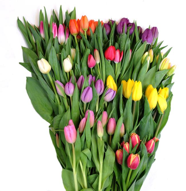 10 pack tulips wholesale box top view