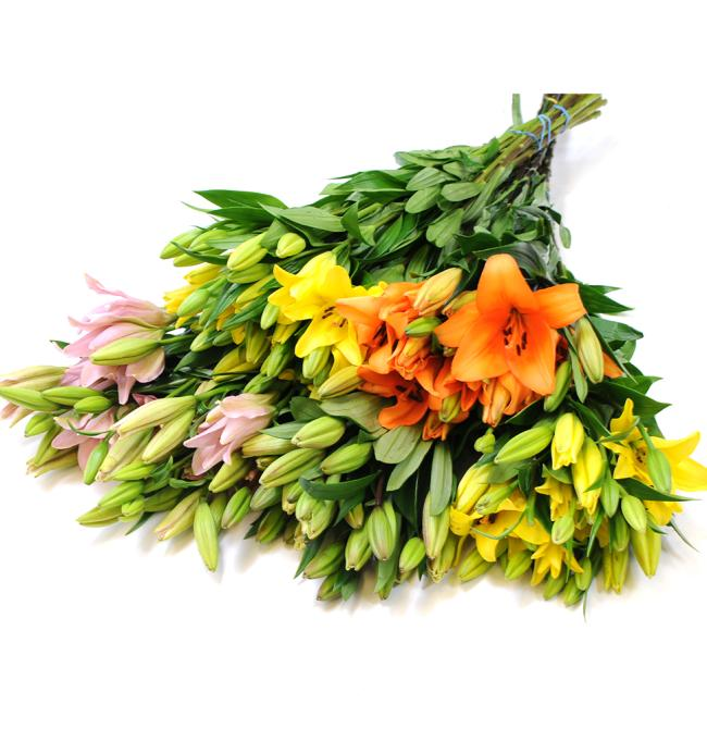 buy sun valley lilies direct