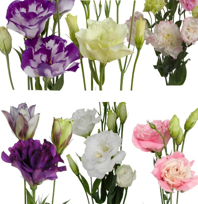 Lisianthus regular mixed box